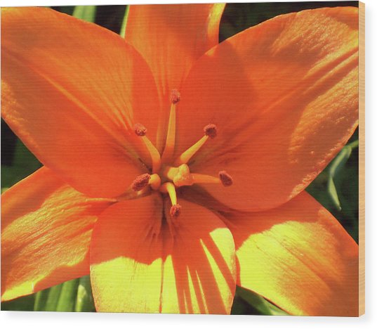 Orange Pop Wood Print