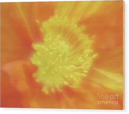 Orange Poppy Wood Print by Addie Hocynec
