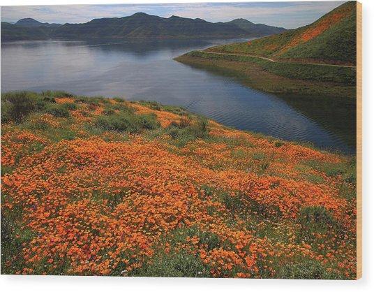 Orange Poppy Fields At Diamond Lake In California Wood Print