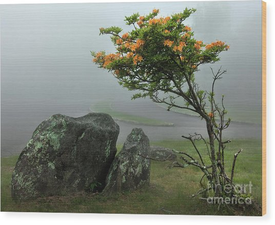 Orange Rhododendron In The Blue Ridge Wood Print by Dan Carmichael