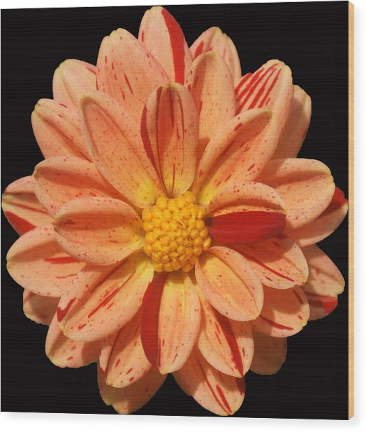 Orange Sherbert Wood Print by Kat Dee