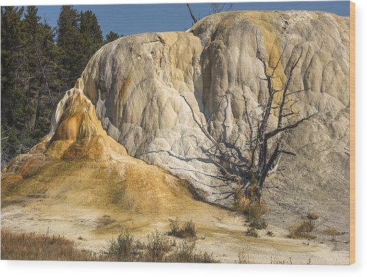 Orange Spring Mound Wood Print by Loree Johnson