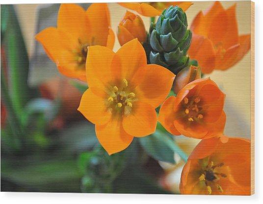 Orange Star Wood Print