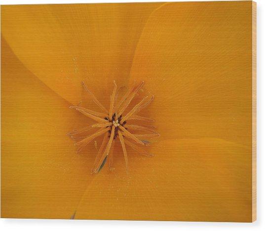 Orange Sunburst Wood Print