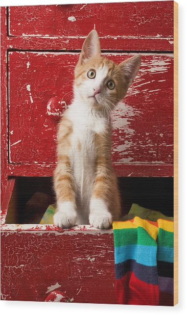 Orange Tabby Kitten In Red Drawer  Wood Print