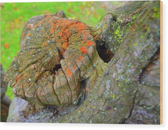 Orange Tree Stump Wood Print