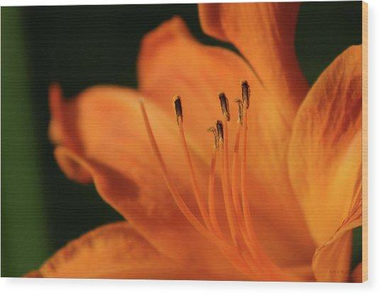 Orange Wave 3096 H_2 Wood Print