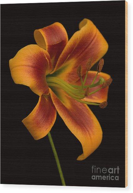 Orange Wonder Wood Print