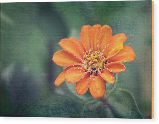 Orange Zinnia Wood Print