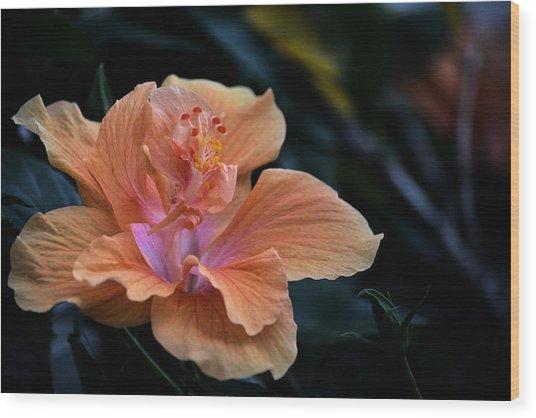 Orangecicle Wood Print