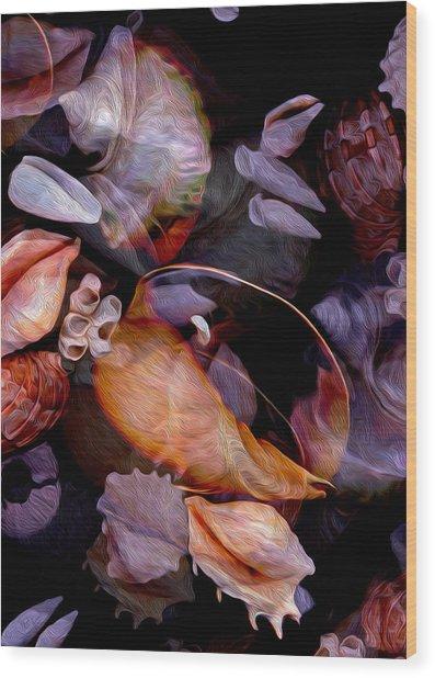 Orbiting Seashells Wood Print