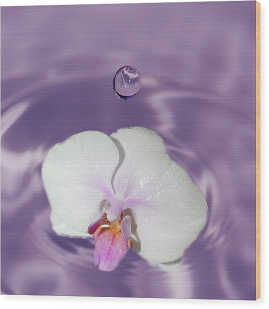 White Orchid Water Drop Wood Print