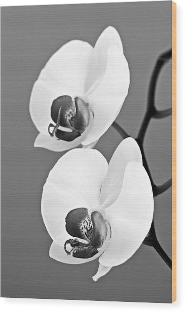 orchid-4- St Lucia Wood Print