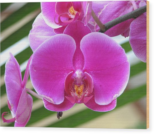 Orchid 8 Wood Print