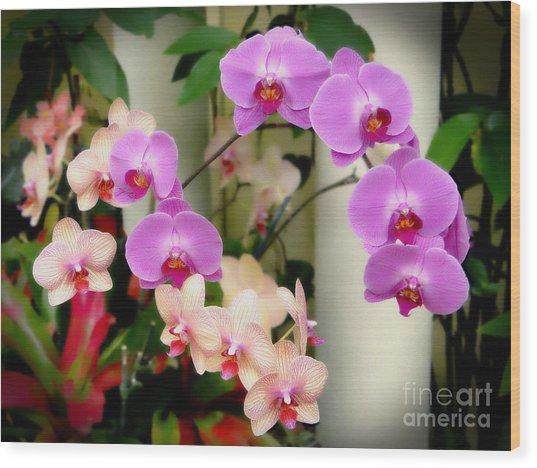 Orchid Beauties Wood Print