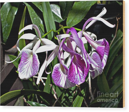Orchid Cluster Wood Print by Robert Sander