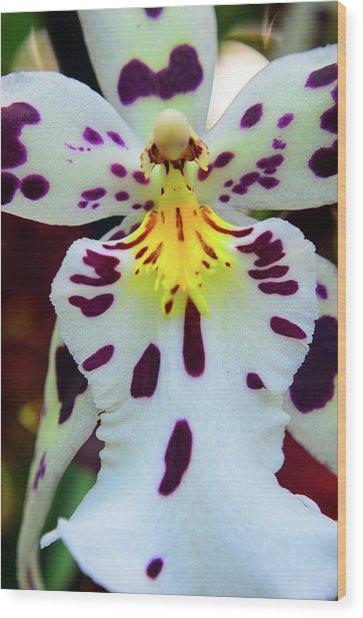 Orchid Cross Wood Print