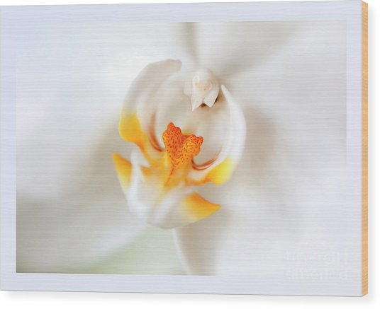 Orchid Detail Wood Print