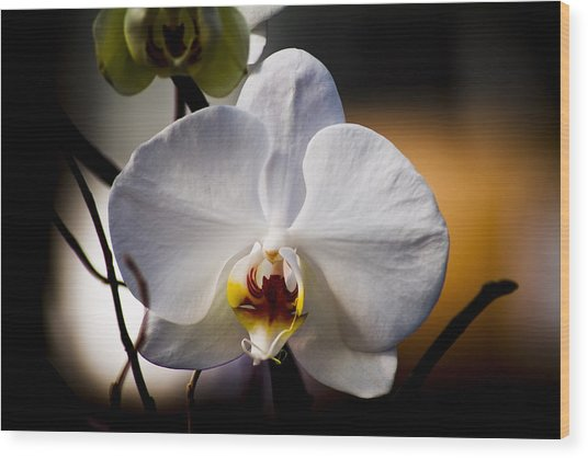 Orchid Wood Print by John Ater