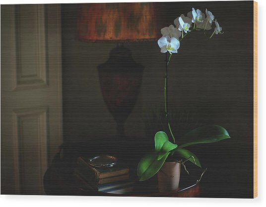 Orchid Morning Wood Print by Paul Green