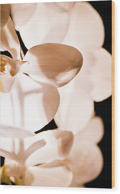 Orchid Wood Print by Nora Batternay