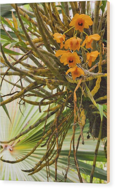 Orchid Wood Print by Pamela Kelly Phillips