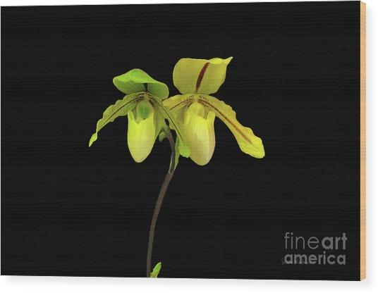 Orchid Paphiopedilum Druid Spring Wood Print