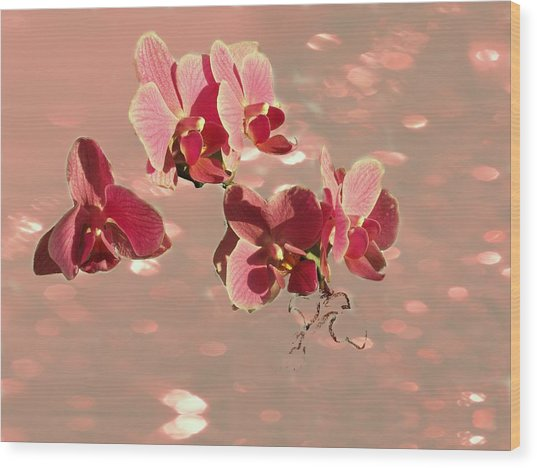 Orchid Petals In Pink Wood Print by Irma BACKELANT GALLERIES