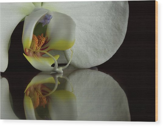Orchid Reflected Wood Print