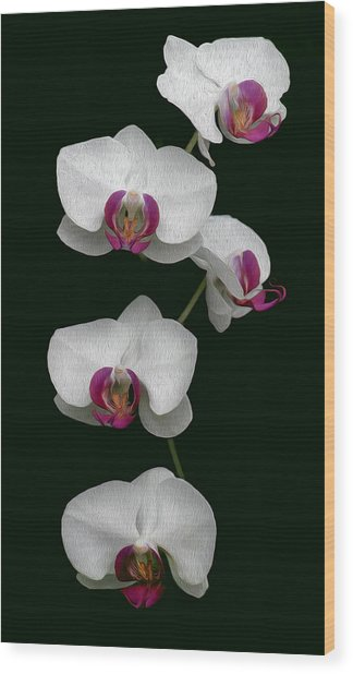Orchid Sequence  Wood Print