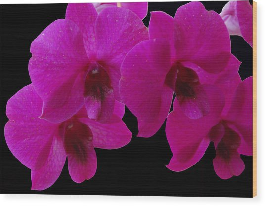 Orchid Song Wood Print