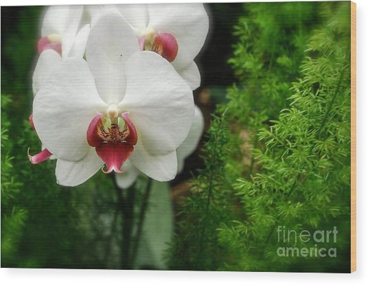 Orchid White Wood Print