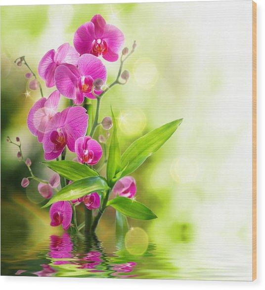 Orchidaceae Wood Print