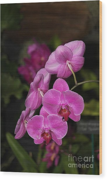 Orchids Alicia Wood Print