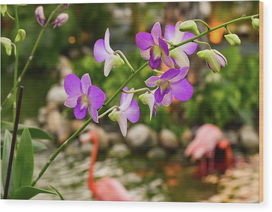 Orchids In Paradise Wood Print
