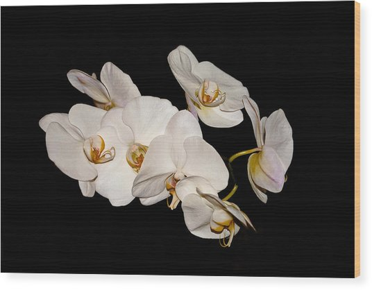 Orchids Wood Print by Pat Carosone