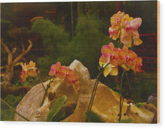 Orchids Wood Print by Stephen Campbell
