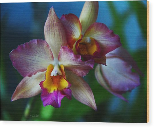 Orchids - Trio Wood Print