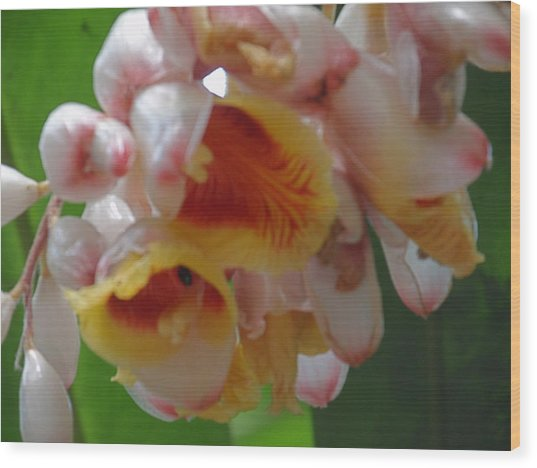 Orchids Wood Print by Ursula Wright