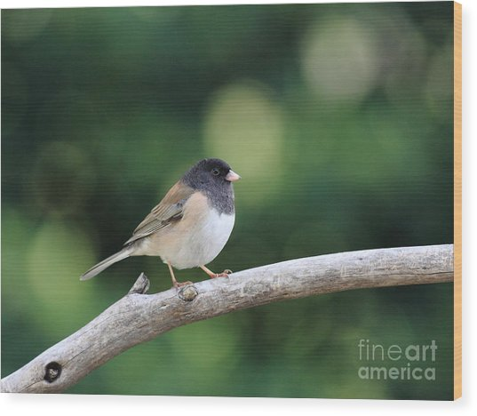 Oregon Junco Wood Print by Wingsdomain Art and Photography