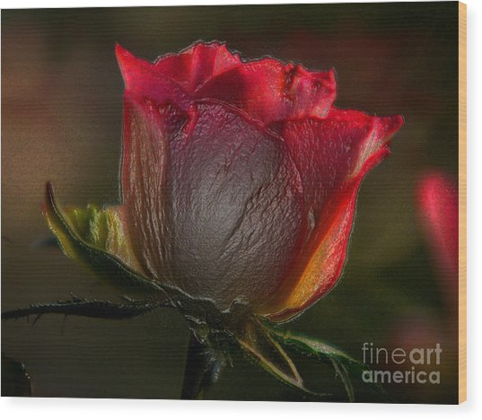 Organic Rose Wood Print