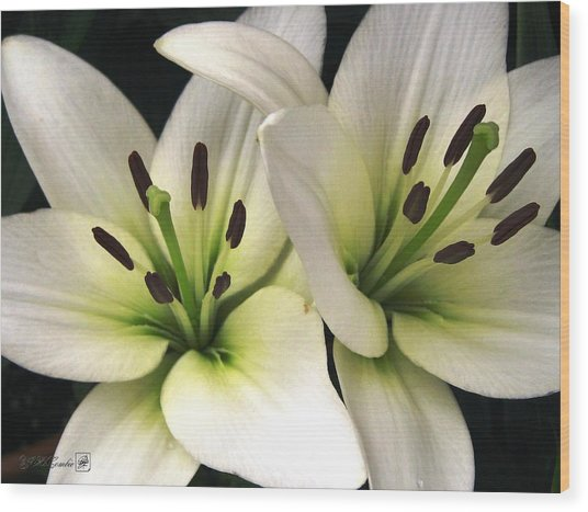 Oriental Lily Named Endless Love Wood Print