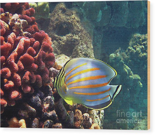 Ornate Butterflyfish On The Reef Wood Print