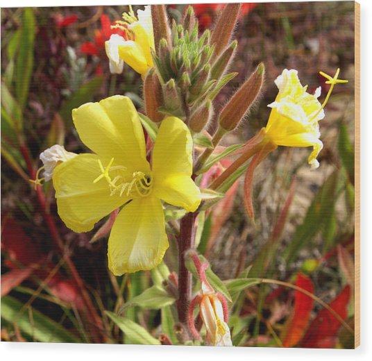 Oso Flaco Yellow Wood Print