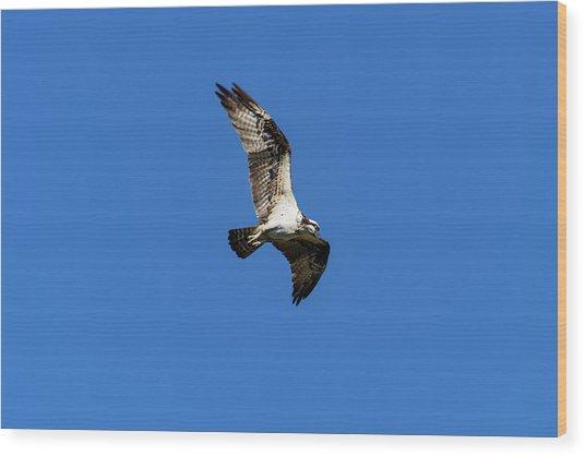 Osprey 5 Wood Print