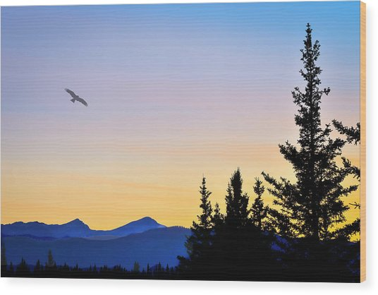 Osprey Against The Sunset Wood Print