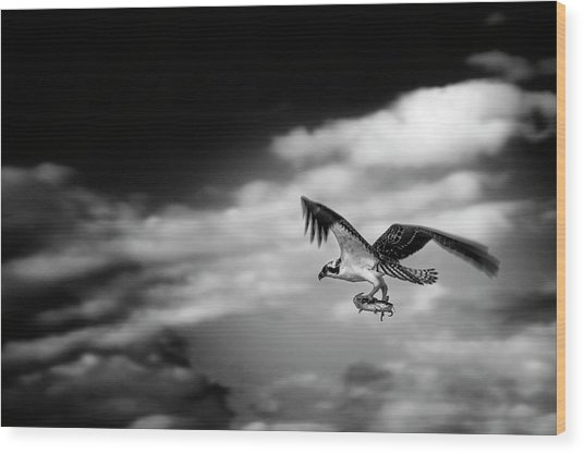 Osprey Catch Of The Day Wood Print