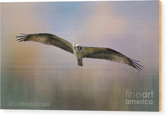 Osprey Over The Shenandoah Wood Print