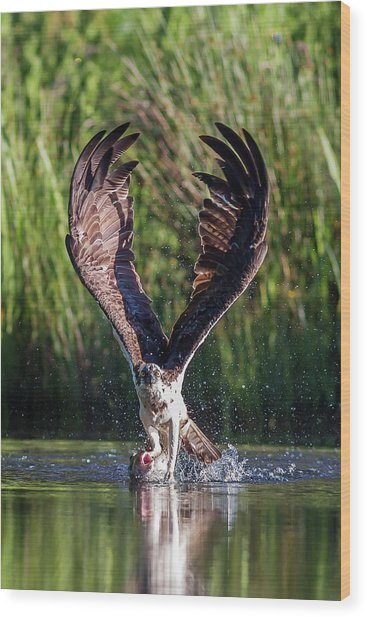 Osprey - Strike Wood Print