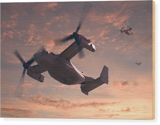 Ospreys In Flight Wood Print